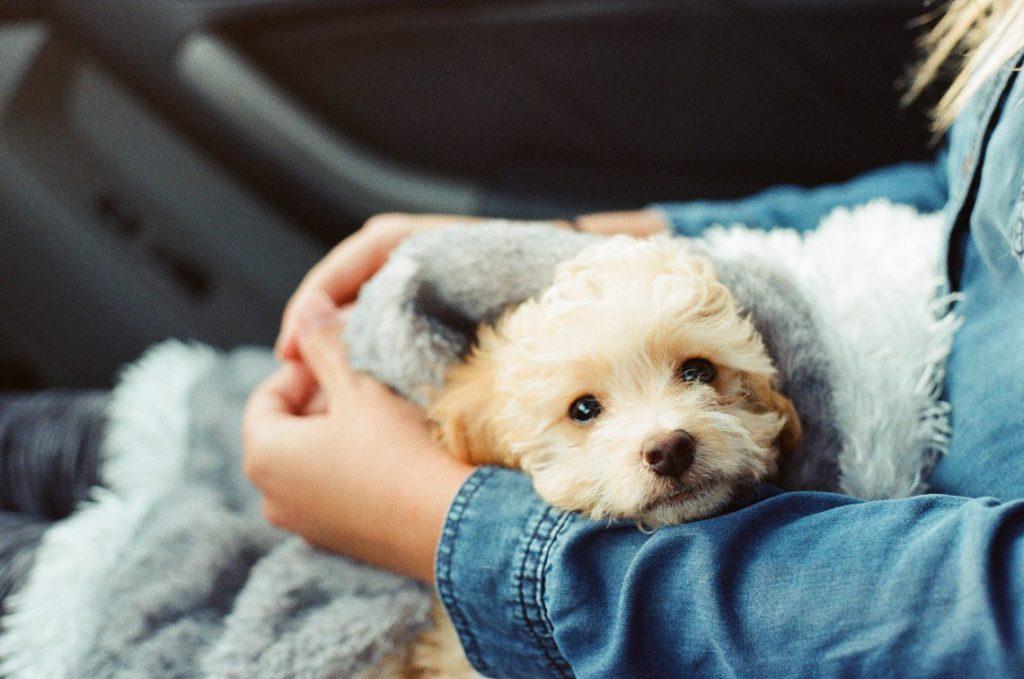 Acest câine absoarbe energiile negative cauzate de depresie