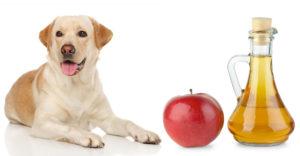 Câine lângă o sticlă plină cu oțet de mere