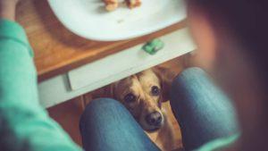 Câine privindu-și stăpânul