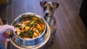 Stăpân oferind câinelui supă de pui
