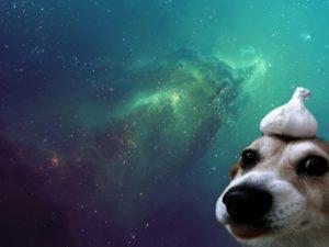 Câine alături de un cățel de usturoi