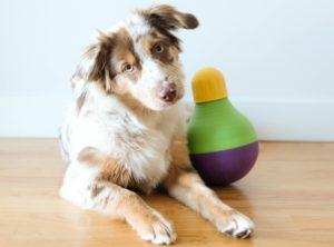 Câine alături de o jucărie Bob-a-Lot produsă de Starmark