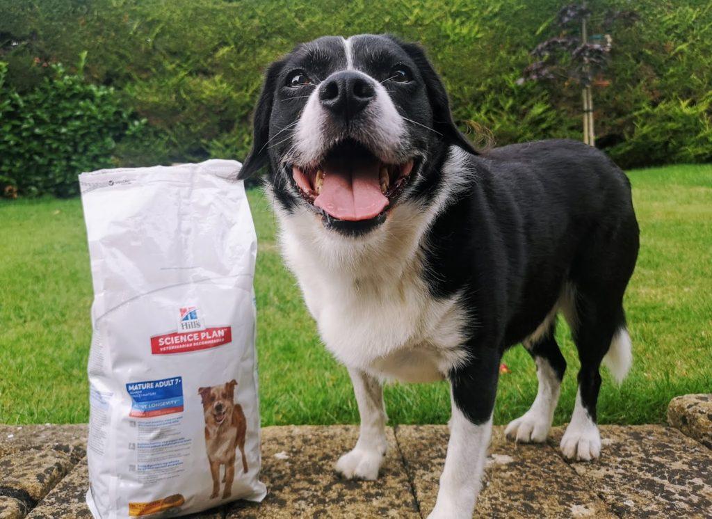 Câine poftind la hrana uscată pentru câini oferită de Hill's