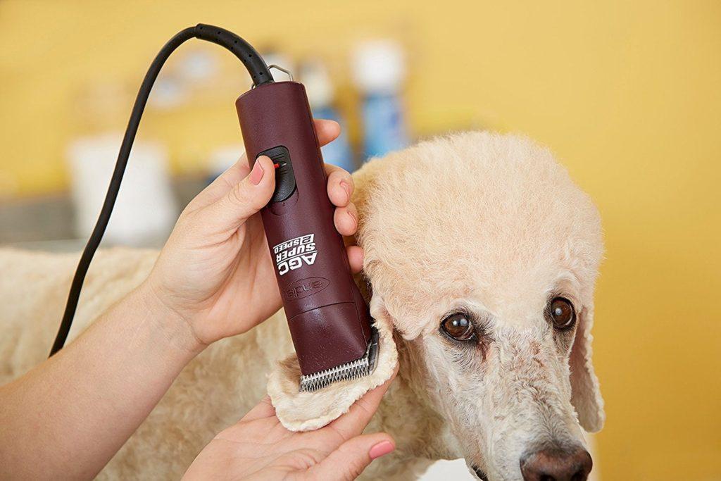 Acest câine este tuns cu aparatul de tuns câini Andis AGC 2 Speed