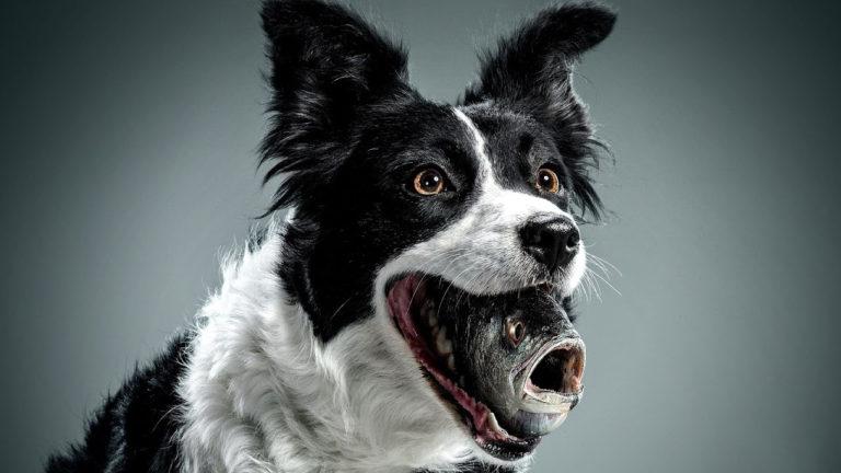 Respirația câinelui poate căpăta un miros de pește