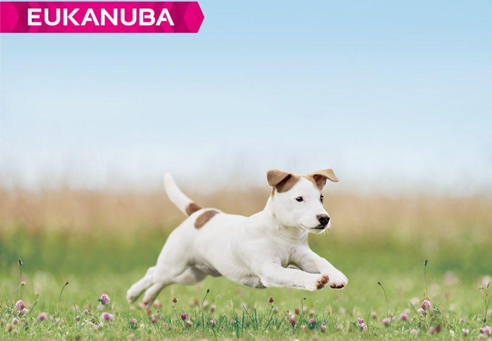 Pui de câine alergând în aer liber
