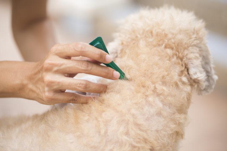 Aplicarea corectă a soluției Frontline pe pielea unui câine