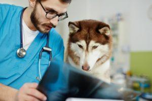 Doctor veterinar analizând o radiografie alături de câine