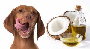 Uleiul de cocos este un aliment excelent și pentru câini