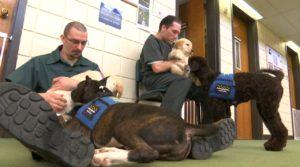 Doi deținuți care dresează câini ce vor deveni câini însoțitori