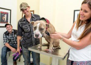 Corona, femela Pitbull salvată dintr-un puț de mină de către niște curajoși iubitori de off-road