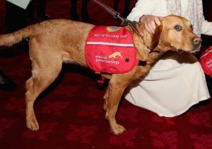 Se consideră că unii câini pot dectecta cancerul