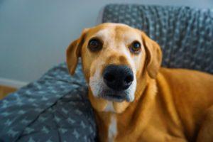 Acest câine stă cu nasul ațintit către camera de fotografiat