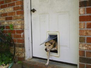 Câine folosind ușa batantă