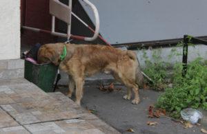 Câine pierdut cotrobăind într-un tomberon de gunoi