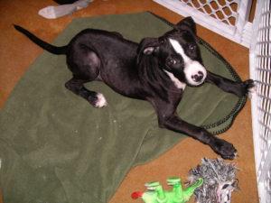 Câine suspect de râie, izolat în cușca sa
