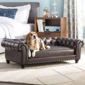 Acest câine stă liniștit pe canapeaua stăpânului