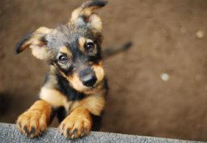 Acest pui adorabil așteaptă cu nerăbdare să-și cunoască familia adoptivă