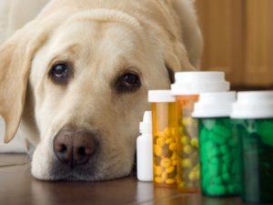 Câine înconjurat de flacoane cu vitamine