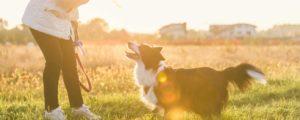 Câine alături de stăpân la o ședință de dresaj