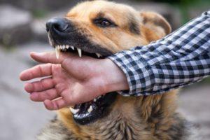 Câine apucă mâna stăpânului