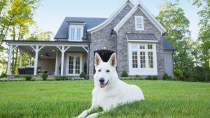 Câinele se odihnește linistit pe iarbă în fața casei stăpânului