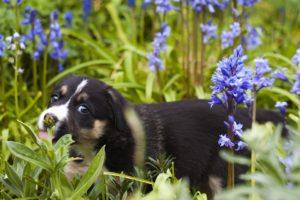 Acest câine se bucură de grădina special amenajată
