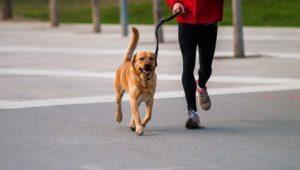 Stăpân aleargă alături de câinele său într-un parc