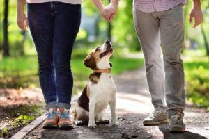 Cuplu tânăr alături de câinele lor Beagle la o plimbare în parc