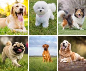 Diferite rase de câini