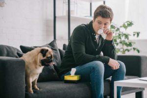 Stăpân afectat de o alergie dezvoltată la părul de câine