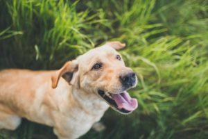 Acest câine este afectat de paraziți intestinali