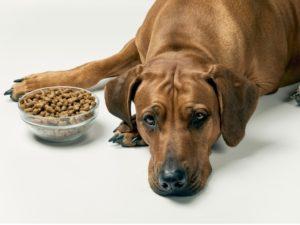 Acest câine are un apetit scăzut