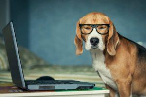 Acest câine poartă ochelari în fața unui laptop