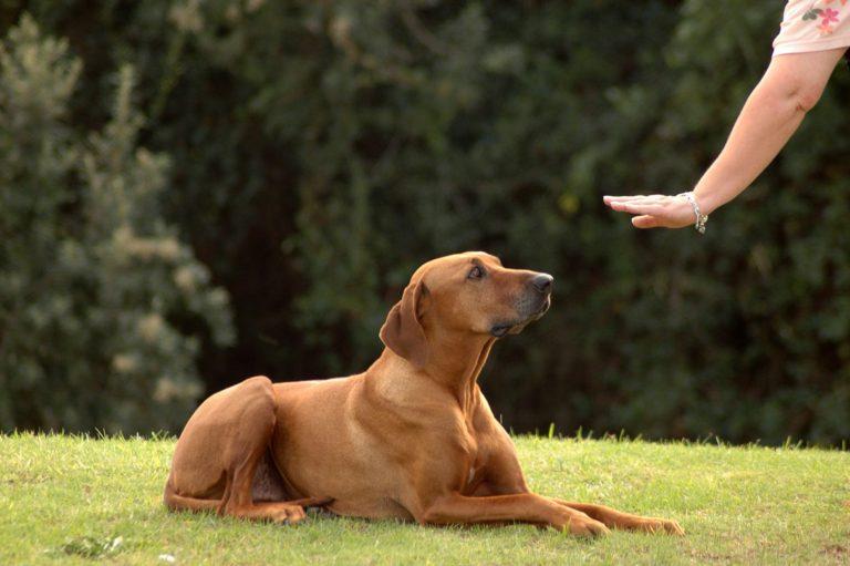 Acest stăpân își dresează câinele învățându-l să aștepte următoarea comandă