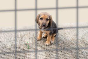 Acest pui de câine este gata să își cunoască familia adoptivă