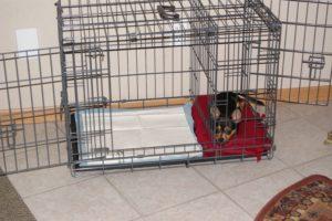 Cușcă special creată pentru ca un cățeluș să învețe să-și facă nevoile acolo unde trebuie