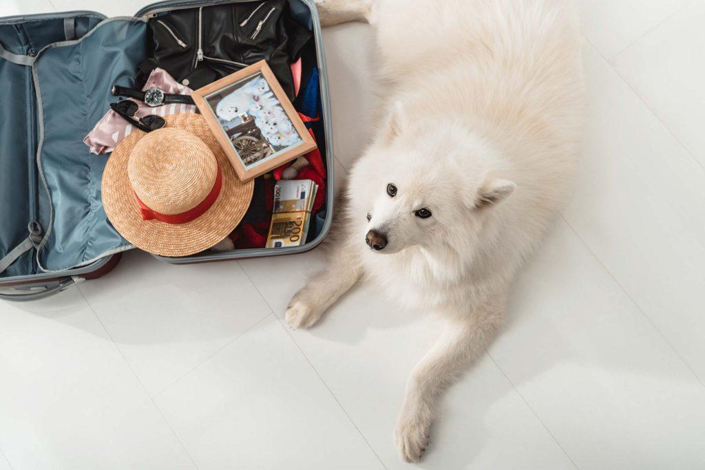 Câine lângă un bagaj, gata de o călătorie alături de stăpân