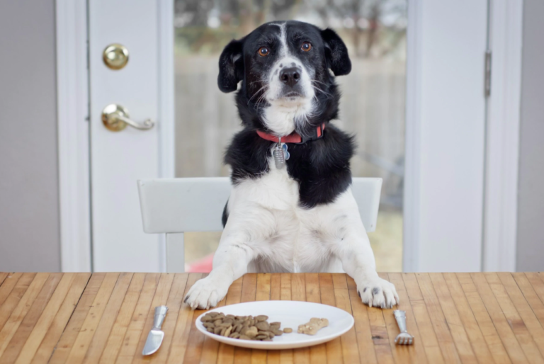 Acest câine stă la masă pe un scaun precum noi, oamenii