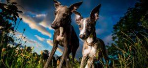 Doi ogari pozați de un fotograf profesionist