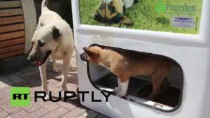 Acest hrănitor automat pentru câini functionează oferă mâncare atunci când aruncați sticle de plastic, încurajând astfel reciclarea