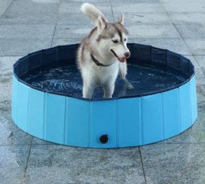 Câine Husky se bucură de o baie într-o piscină specială pentru câini