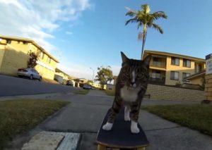 Pisică pe placa de skateboard
