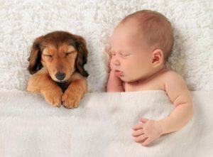 Pui de câine doarme alături de un bebeluș