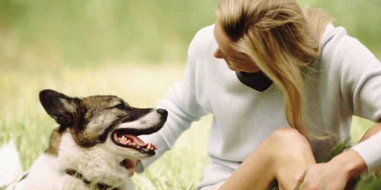 Tânără stăpână își mângâie câinele pe un câmp înverzit