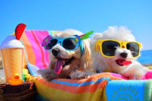Doi câini de talie mică se bucură pe șezlong de o zi caldă de vară