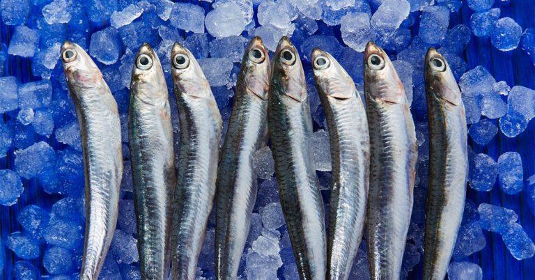 Sardine în gheață, comestibile pentru câini
