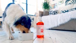 Acest câine primește un supliment pe bază de ulei de somon, bogat în acizi grași de tip Omega
