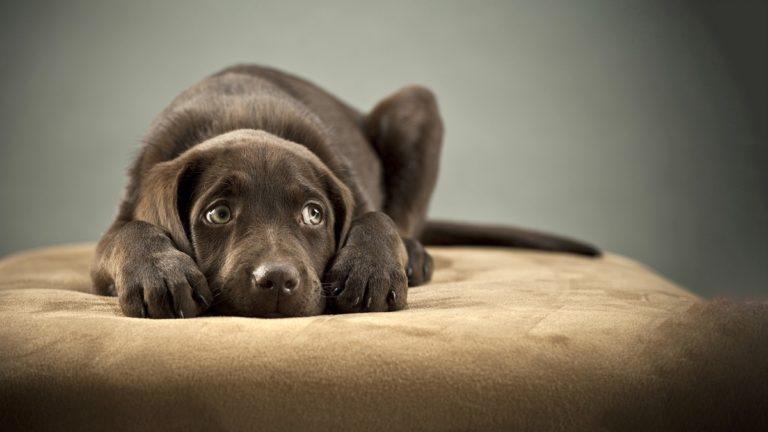 În ochii acestui câine se pot citi stresul, teama și anxietatea