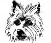 Ilustrație Wheaten Terrier cu blană moale